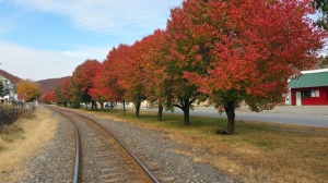 Red and Green Trees, North Railroad Street, Tamaqua, 10-31-2015 (3)