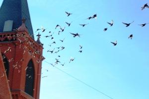 Flock of Birds Over Tamaqua, 11-25-2015 (11)