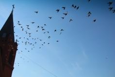 Flock of Birds Over Tamaqua, 11-25-2015 (12)