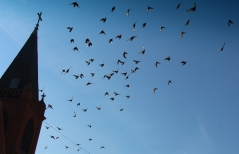 Flock of Birds Over Tamaqua, 11-25-2015 (13)