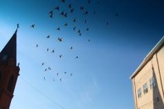 Flock of Birds Over Tamaqua, 11-25-2015 (14)
