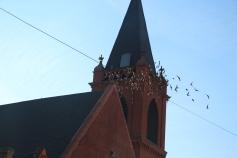 Flock of Birds Over Tamaqua, 11-25-2015 (9)