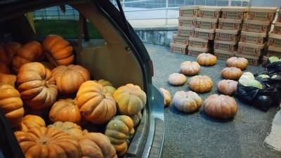 Free Apples and Pumpkins, Tamaqua Salvation Army, Tamaqua, 11-9-2015 (9)