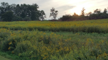 View of Flower Field, Tuscarora State Park, Barnesville, 8-30-2015 (6)