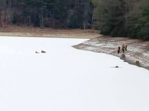 deer-stuck-on-ice-north-manheim-township-1-7-2017-1