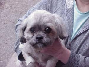 dog-found-in-tamaqua-1-14-2017