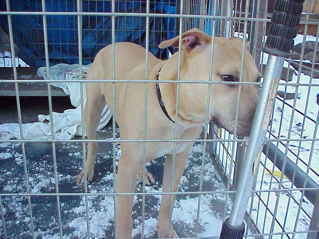 Male dog found in Tamaqua