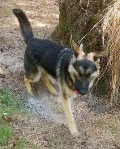 dog-harvey-missing-from-barnesville-1-22-2017-1