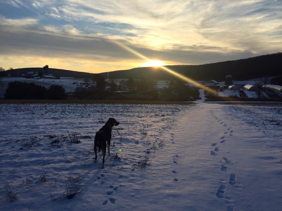 Hemi in the snow in Walker Township