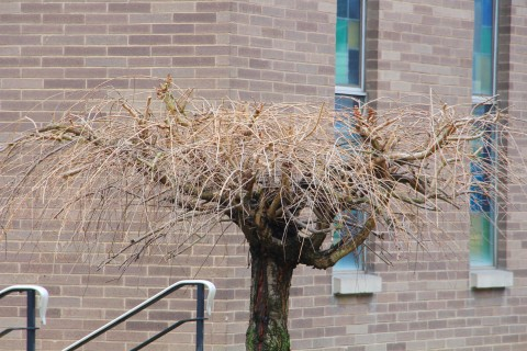 photo-quest-tree-trinity-ucc-tamaqua-1-22-2017-1