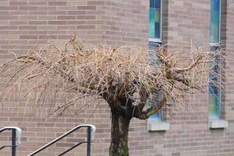 photo-quest-tree-trinity-ucc-tamaqua-1-22-2017-1