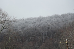 winter-wonderland-ice-on-trees-along-sr54-and-interstate-81-barnesville-1-24-2017-10