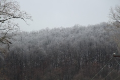 winter-wonderland-ice-on-trees-along-sr54-and-interstate-81-barnesville-1-24-2017-13