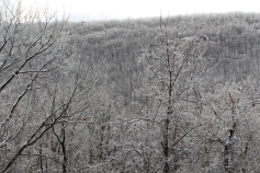 winter-wonderland-ice-on-trees-along-sr54-and-interstate-81-barnesville-1-24-2017-18