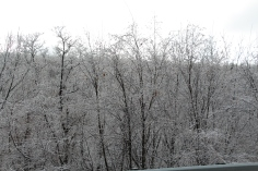 winter-wonderland-ice-on-trees-along-sr54-and-interstate-81-barnesville-1-24-2017-20