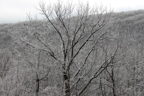 winter-wonderland-ice-on-trees-along-sr54-and-interstate-81-barnesville-1-24-2017-22