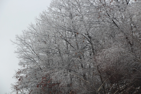 winter-wonderland-ice-on-trees-along-sr54-and-interstate-81-barnesville-1-24-2017-26