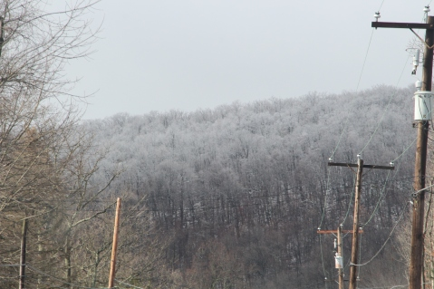 winter-wonderland-ice-on-trees-along-sr54-and-interstate-81-barnesville-1-24-2017-5