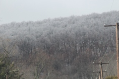 winter-wonderland-ice-on-trees-along-sr54-and-interstate-81-barnesville-1-24-2017-7