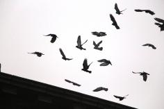 circling-pigeons-west-broad-street-tamaqua-2-8-2017-26