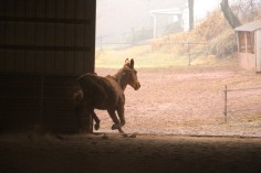 horses-at-horses-and-horizons-therapeutic-learning-center-west-penn-1-21-2017-10