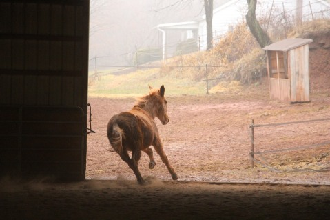 horses-at-horses-and-horizons-therapeutic-learning-center-west-penn-1-21-2017-11