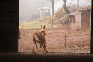 horses-at-horses-and-horizons-therapeutic-learning-center-west-penn-1-21-2017-12