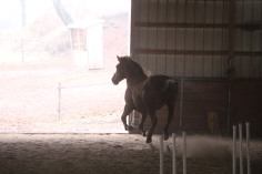 horses-at-horses-and-horizons-therapeutic-learning-center-west-penn-1-21-2017-16