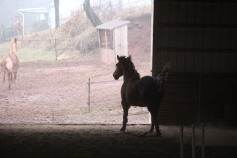 horses-at-horses-and-horizons-therapeutic-learning-center-west-penn-1-21-2017-17