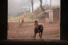horses-at-horses-and-horizons-therapeutic-learning-center-west-penn-1-21-2017-18