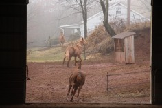 horses-at-horses-and-horizons-therapeutic-learning-center-west-penn-1-21-2017-20