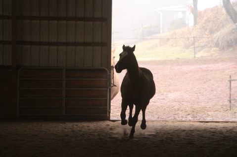 horses-at-horses-and-horizons-therapeutic-learning-center-west-penn-1-21-2017-22