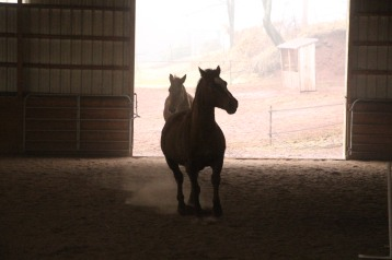 horses-at-horses-and-horizons-therapeutic-learning-center-west-penn-1-21-2017-23