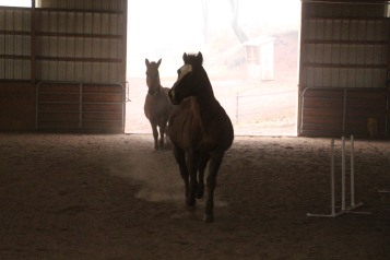 horses-at-horses-and-horizons-therapeutic-learning-center-west-penn-1-21-2017-24