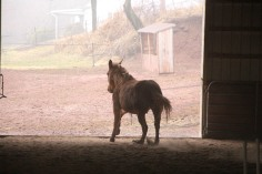 horses-at-horses-and-horizons-therapeutic-learning-center-west-penn-1-21-2017-32