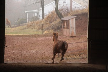 horses-at-horses-and-horizons-therapeutic-learning-center-west-penn-1-21-2017-35