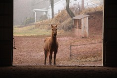 horses-at-horses-and-horizons-therapeutic-learning-center-west-penn-1-21-2017-38