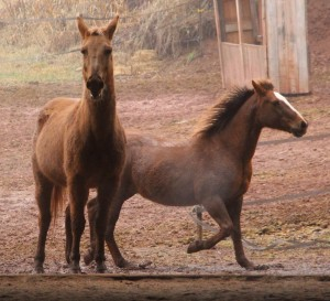 horses-at-horses-and-horizons-therapeutic-learning-center-west-penn-1-21-2017-39