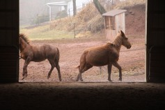 horses-at-horses-and-horizons-therapeutic-learning-center-west-penn-1-21-2017-40