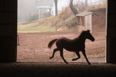 horses-at-horses-and-horizons-therapeutic-learning-center-west-penn-1-21-2017-41