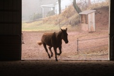 horses-at-horses-and-horizons-therapeutic-learning-center-west-penn-1-21-2017-42