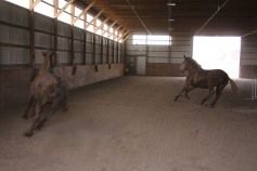 horses-at-horses-and-horizons-therapeutic-learning-center-west-penn-1-21-2017-52