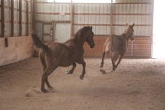 horses-at-horses-and-horizons-therapeutic-learning-center-west-penn-1-21-2017-53