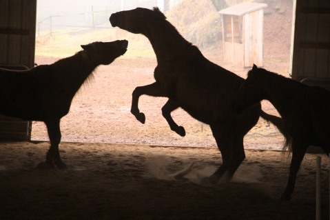 horses-at-horses-and-horizons-therapeutic-learning-center-west-penn-1-21-2017-69
