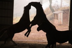 horses-at-horses-and-horizons-therapeutic-learning-center-west-penn-1-21-2017-71