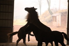 horses-at-horses-and-horizons-therapeutic-learning-center-west-penn-1-21-2017-72