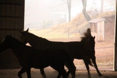 horses-at-horses-and-horizons-therapeutic-learning-center-west-penn-1-21-2017-74