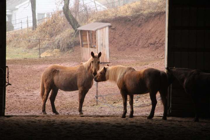 horses-at-horses-and-horizons-therapeutic-learning-center-west-penn-1-21-2017-80