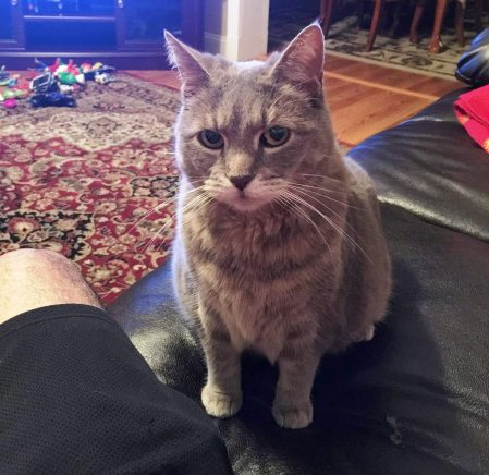 missing-cat-kitty-east-union-and-pine-street-tamaqua-2-8-2017
