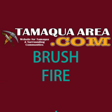 tamaquaarea-logo-brush-fire